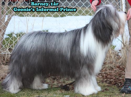 BarneyIMG_8044