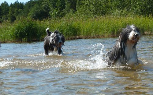 Skoj att springa i vattnet!