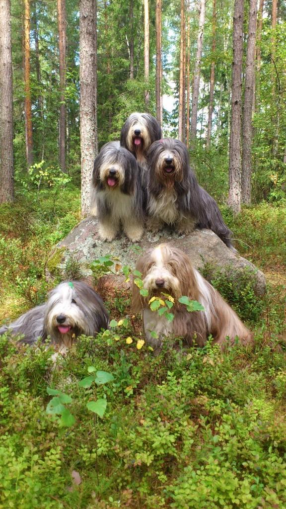 Hela högen! Sammeth, Happy och Mollie på stenen. Barney och Flora framför.