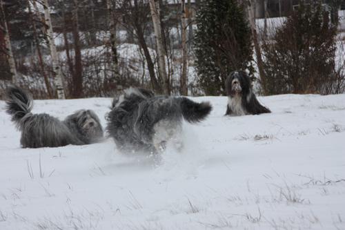 Buuus! Barney, Sammeth och Mollie