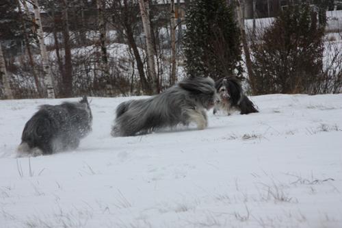 Barney, Sammeth och Mollie