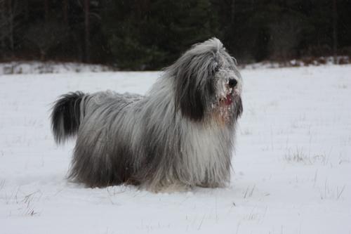 Snömonstret Barney spanar