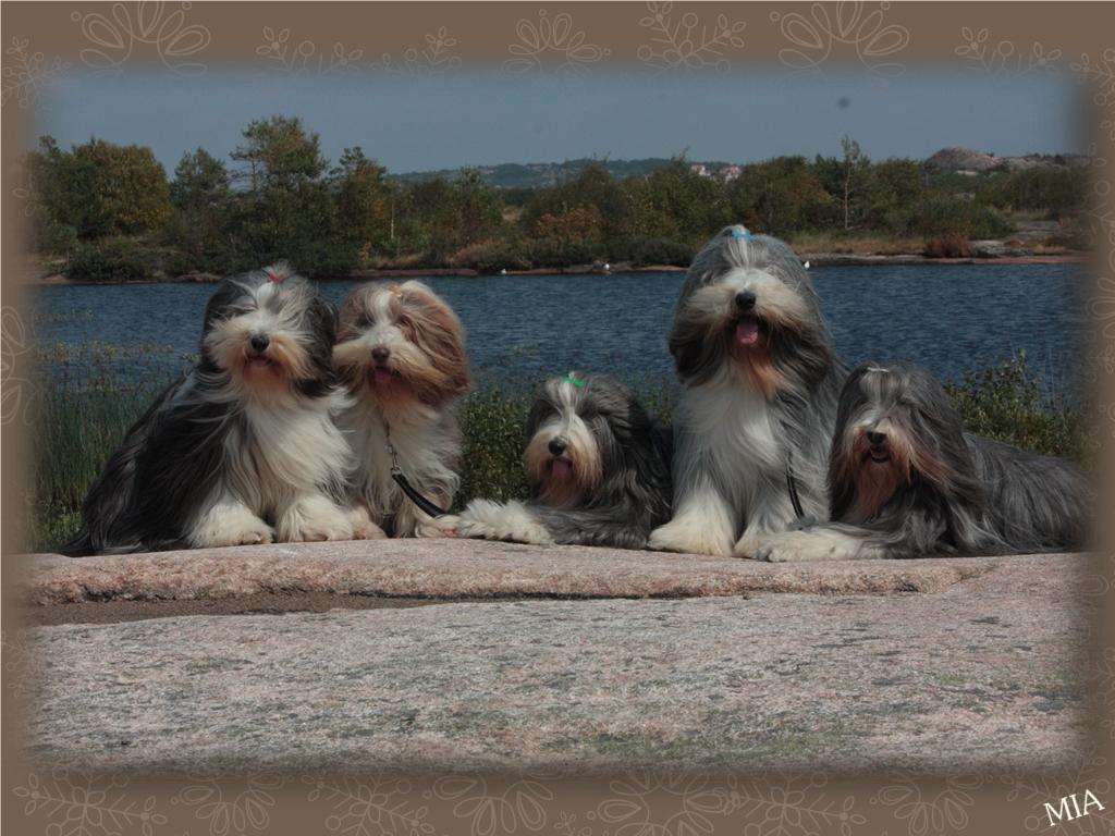 Sammeth, Flora, Happy Barney och Mollie
