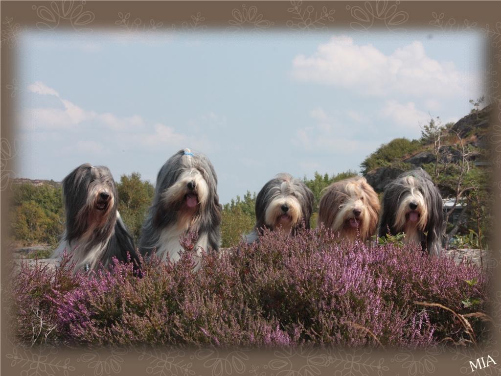 Mollie, Barney, Sammeth, Flora och Happy