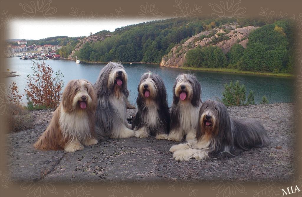 Flora, Barney, Happy, Sammeth och Mollie