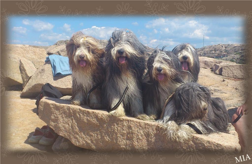 Flora, Barney, Sammeth, Happy och Mollie