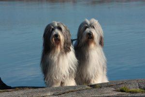 Hebbe & Egon