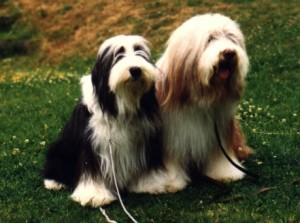 Bonnie och Theo